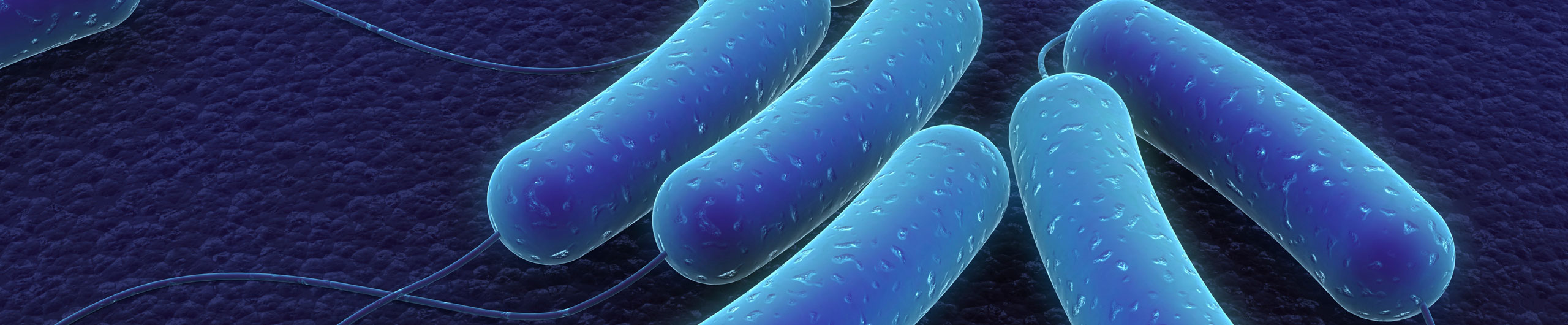 Legionella bugs under the microscope